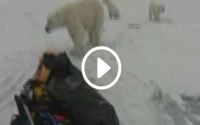 Ousland & Ulrich Encounter with Polar Bears