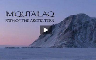 Imitiqutailq: Path of the Arctic Tern